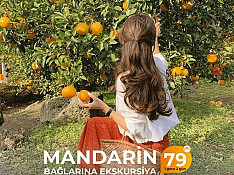 Mandarin-sitrus bağlarına ekskursiya turu Bakı